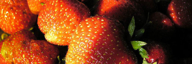 Huelva: Exportschlager roter Beeren