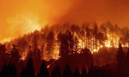 Waldbrand in Naturschutzgebiet auf Mallorca von Menschen verursacht