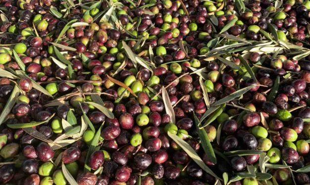 Olivenbauern wehren sich gegen den Nutri-Score für Olivenöl