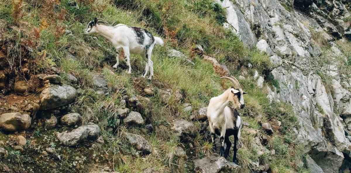 Málaga: drei Wilderer nach Töten einer Ziege verhaftet