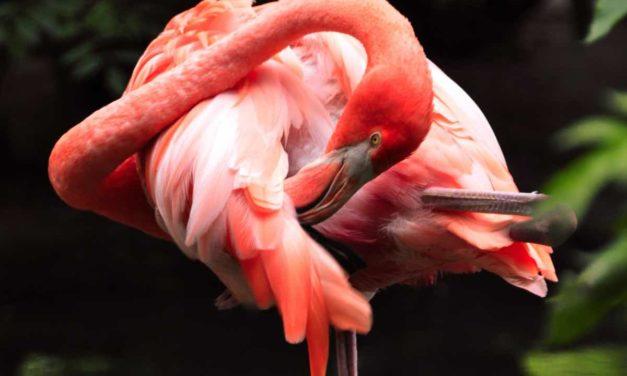530.000 Vögel haben in den Doñana-Sümpfen überwintert