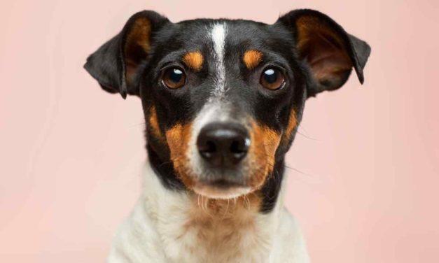 Pfotenhilfe Andalusien e.V. – Hundehilfe mit Herz und Verstand
